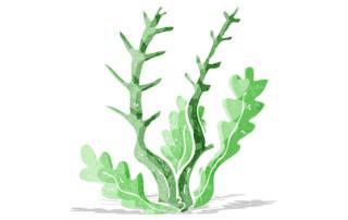 algae as cure for depression